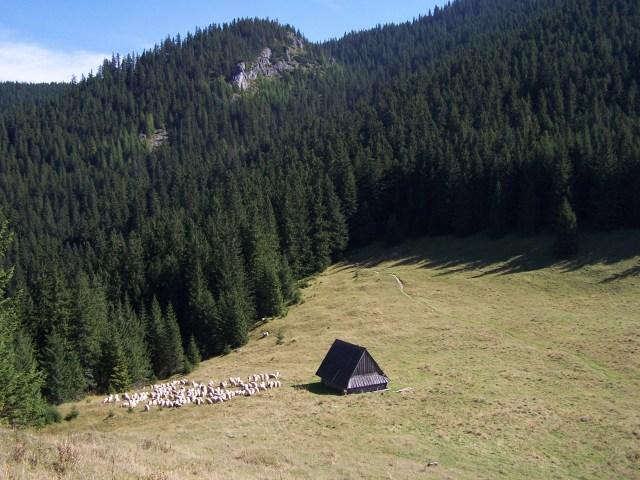'Polana Jamy (Tatra Mountains)' - photo found on Wiki Commons and attributable to Opioła Jerzy