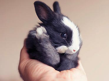 A Cute Baby Rabbit Grows Up In Front Of Your Eyes Wow Amazing