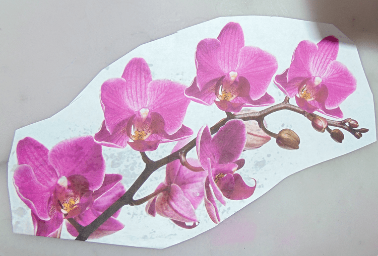 orchid trimmed