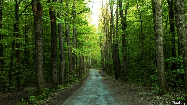 Forest_Nature_Trees_640x360_80427P00-PBHYI_1556564652914.jpg