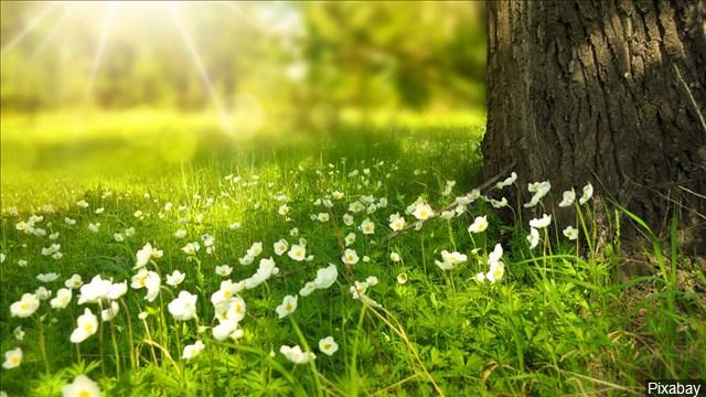 Spring_Sunlight_Flowers_640x360_90320P00-WPJZF_1554135895621.jpg