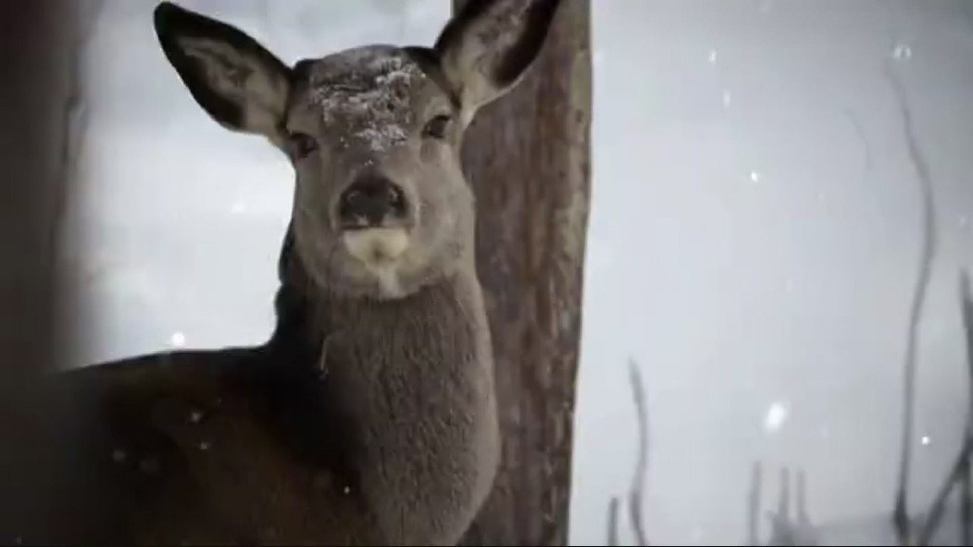 6 West Virginia state parks to host deer hunts this fall