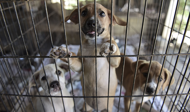 APTOPIX Puerto Rico Hurricane Abandoned Animals_1518440998621