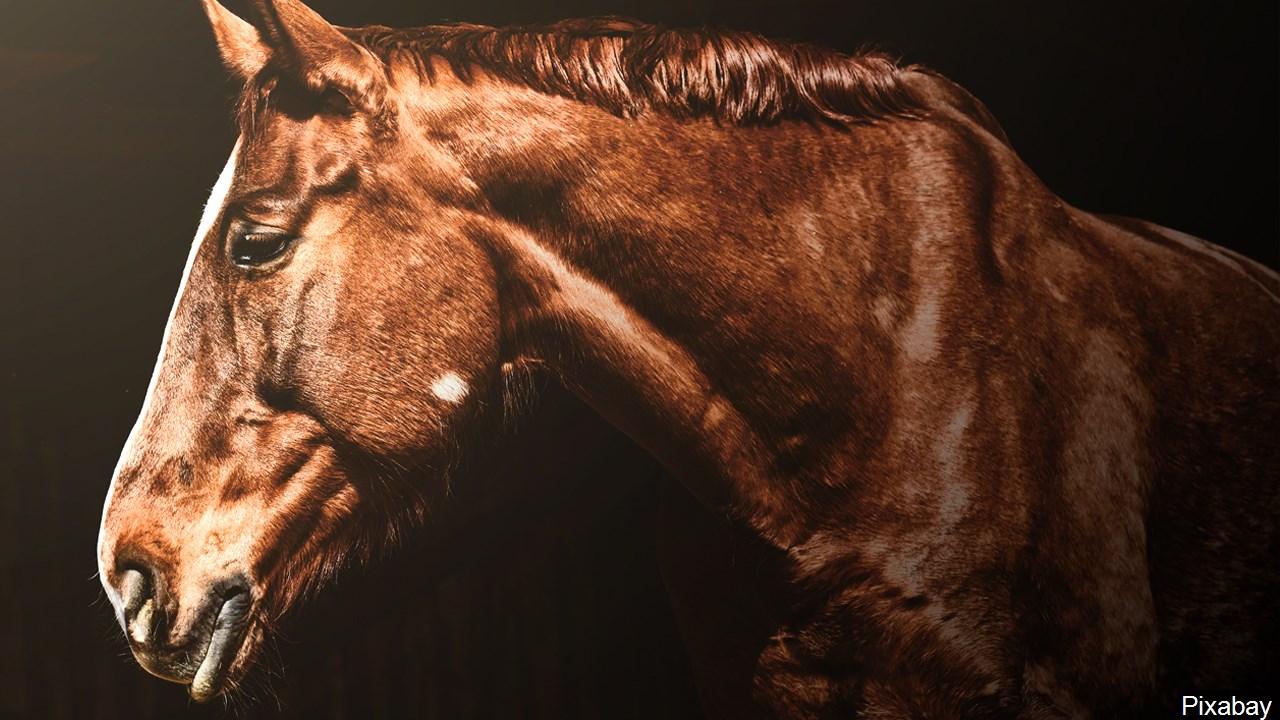 Ohio horse confirmed with Eastern equine encephalitis virus