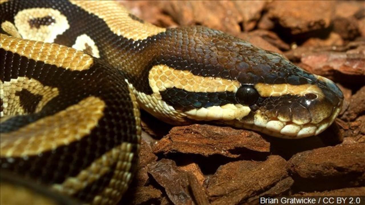 Image result for python