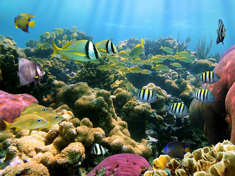 glover's reef atoll