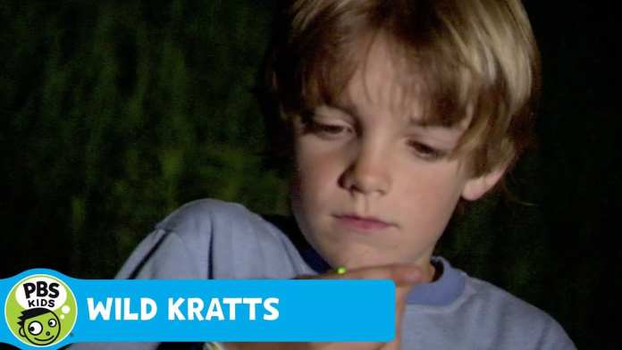 WILD KRATTS | Wild Kratts Glow | PBS KIDS