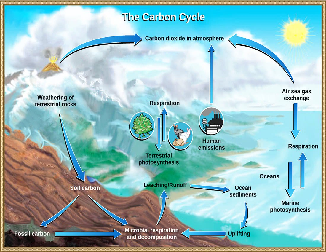 Carbon Cycle Usgs