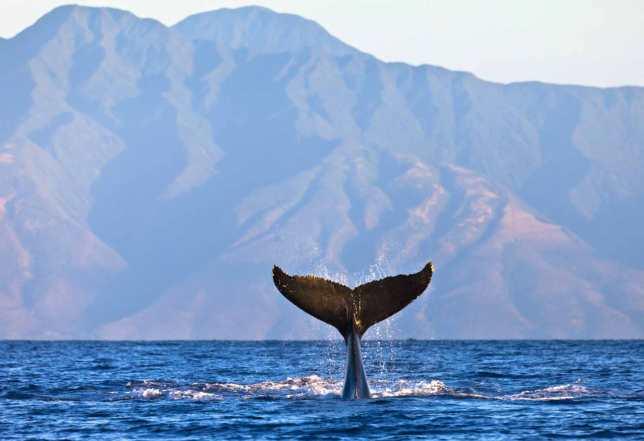 whale-flukes