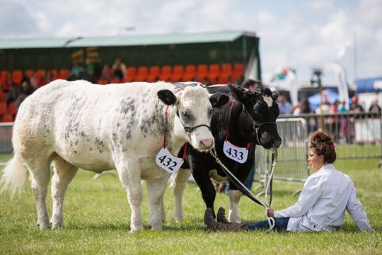 Pembrokeshire County Show