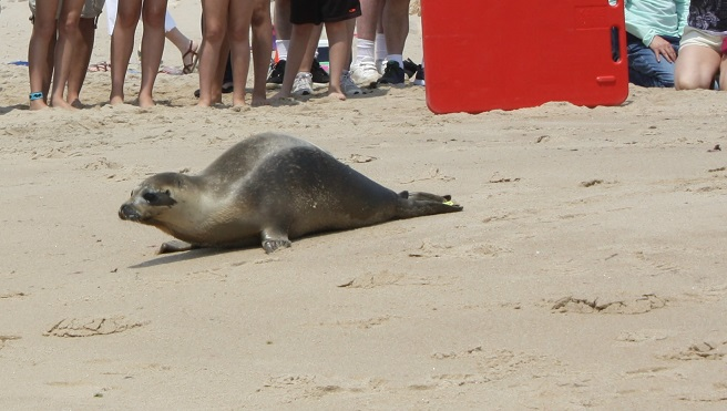 Seal_Release_11_181734