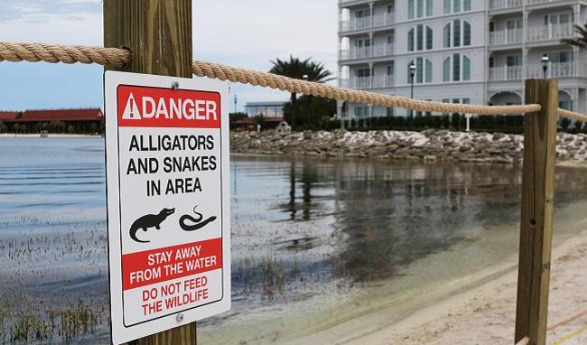 Alligator Drags Toddler_320391