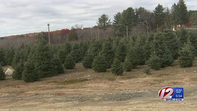 christmas-tree-farm_384970