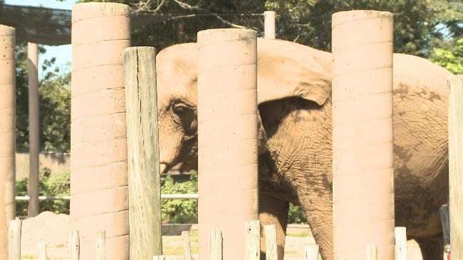 ElephantPic_530556