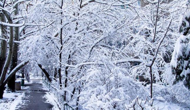 sxc winter weather scene_1347