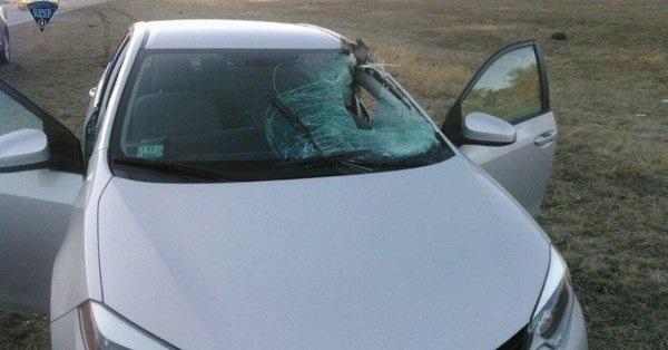 Norton turkey into windshield_1522543824899.jpg.jpg