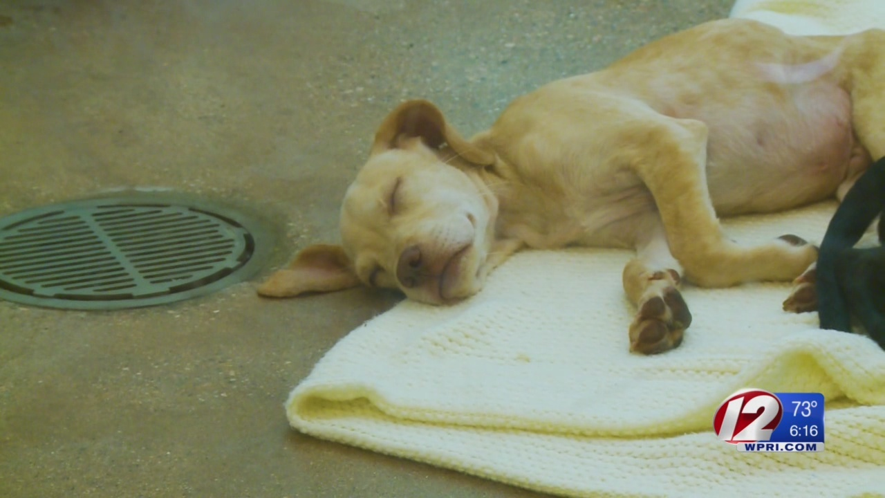 Pets Evacuated from South Carolina to Go Up for Adoption