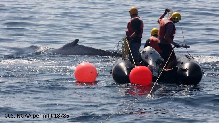 whale rescue_1536171162083.jpg.jpg