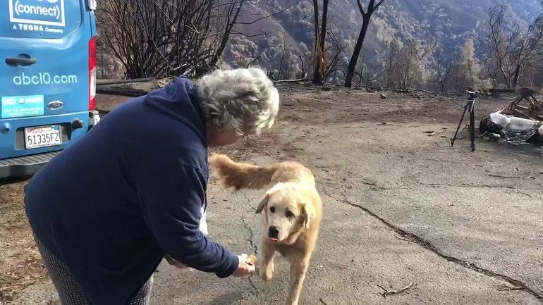 California Wildfire Dogs Long Wait_1544441188229