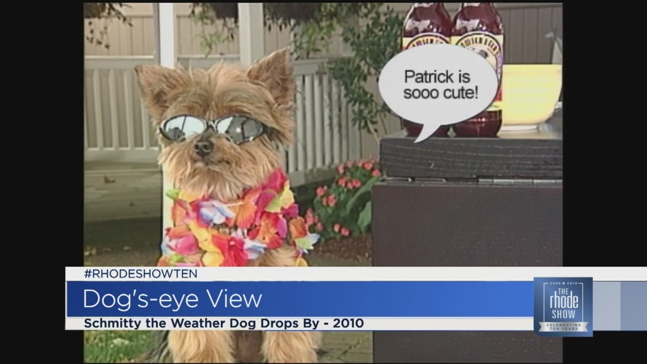 Celebrating Ten Years: RS Throwback - A Visit from Schmitty The Weather Dog