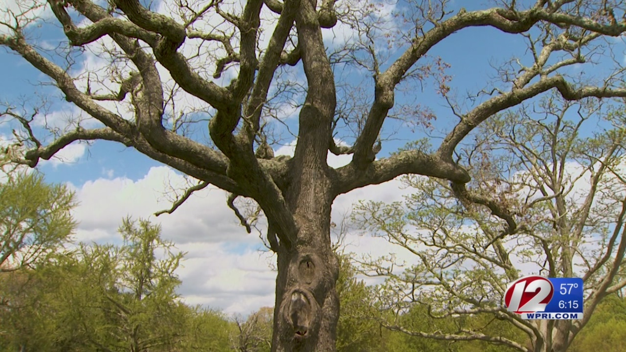 Certain trees to be removed from Goddard Park due to safety concerns