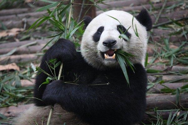 panda - what is google panda