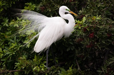 Herons and Egrets | WP3 Photography