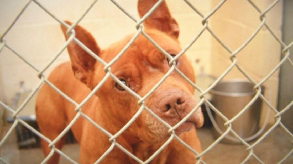 adopt dog_103006
