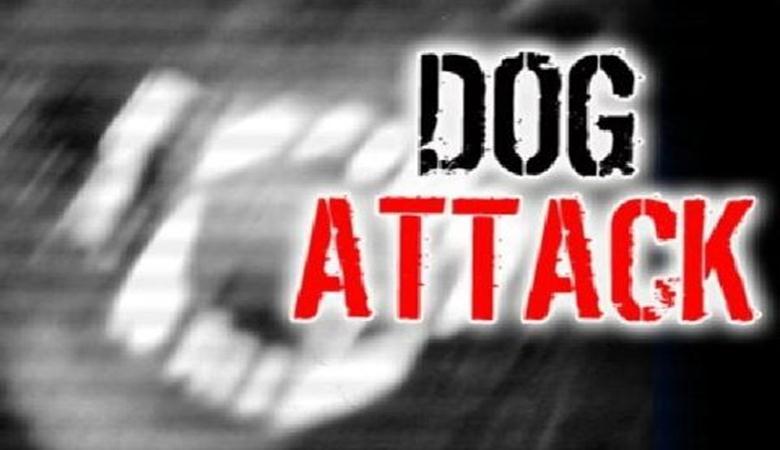 dog_attack (Copy)_130055