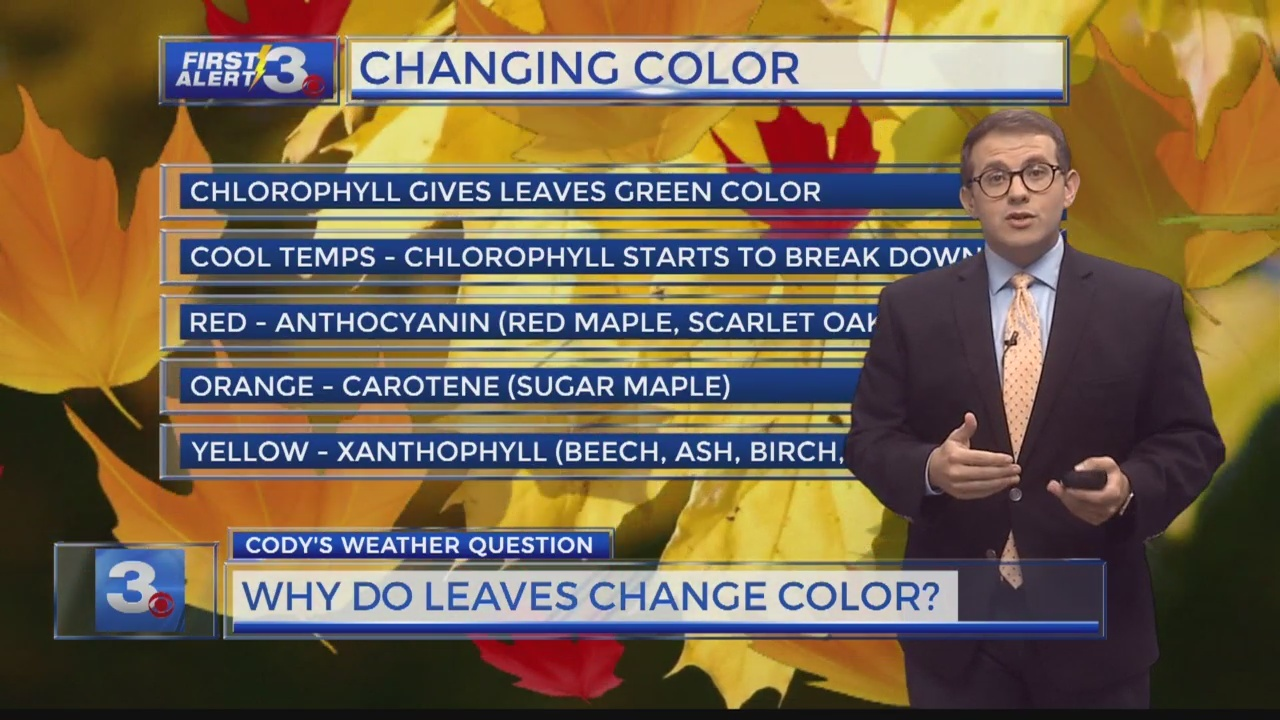 Cody's Weather Question: Why do leaves change color?