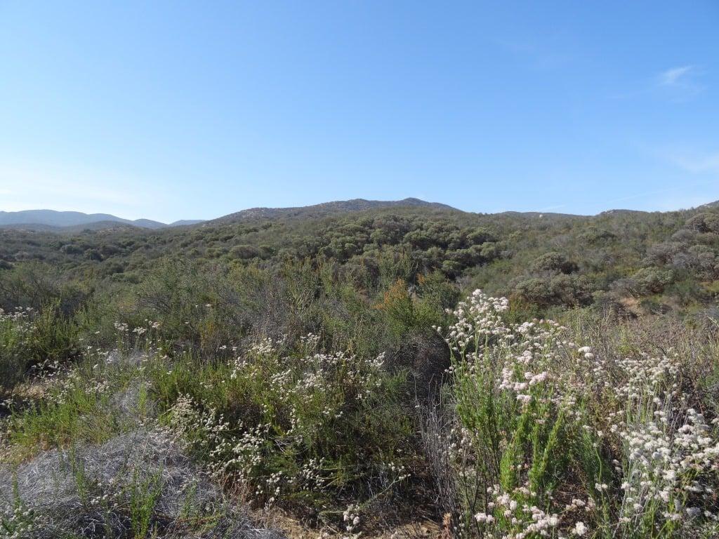 Bautista Canyon