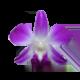 icon_flower%e0%b8%94%e0%b8%ad%e0%b8%81%e0%b8%81%e0%b8%a5%e0%b9%89%e0%b8%a7%e0%b8%a2%e0%b9%84%e0%b8%a1%e0%b9%89%e0%b8%9a%e0%b8%ad%e0%b8%a1%e0%b9%81%e0%b8%94%e0%b8%87