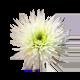 icon_flower%e0%b8%94%e0%b8%ad%e0%b8%81%e0%b8%a1%e0%b8%b1%e0%b8%a1%e0%b8%aa%e0%b9%84%e0%b8%9b%e0%b9%80%e0%b8%94%e0%b8%ad%e0%b8%a3%e0%b9%8c%e0%b8%82%e0%b8%b2%e0%b8%a7