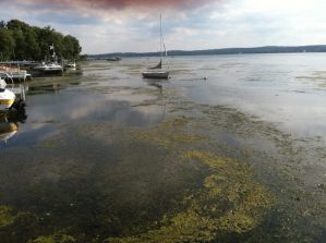 Herbicide Application to Take Place Starting Monday in Bemus Bay
