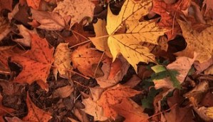 Leaf Pick Up in Jamestown Begins Week of Nov. 3