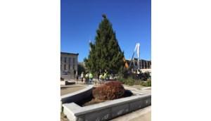 City Christmas Tree Installed on Tracy Plaza