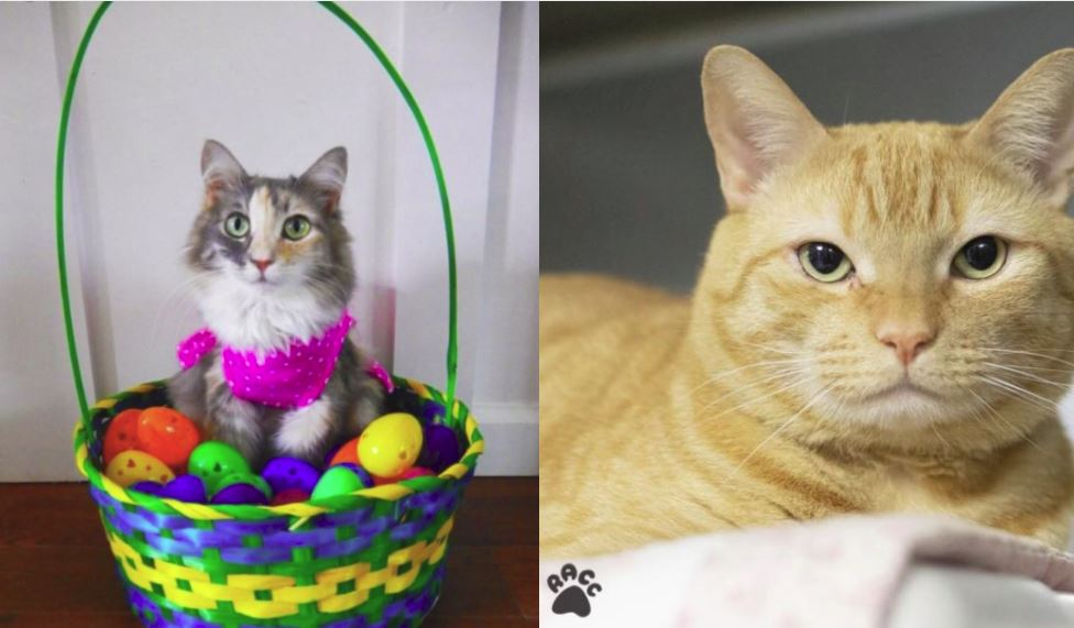 cats adoption_1555781123601.JPG.jpg