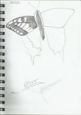 butterfly,grasshopper