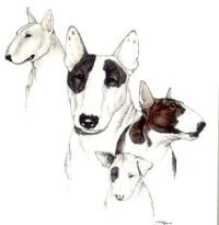 SALE!!! Dog Breed NOTE CARDS by Laura Rodgers