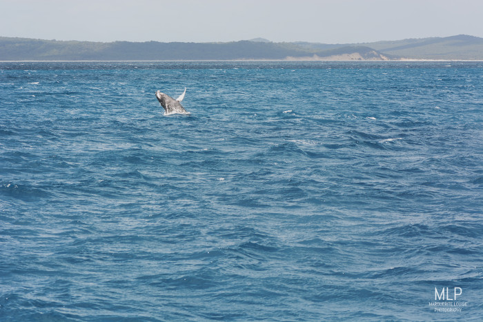 whale, whale watching