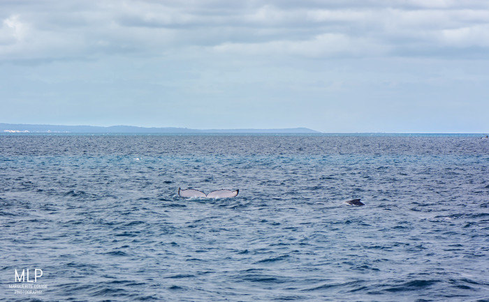 whales, whale, whale watching