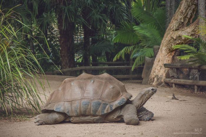 tortoise, australia zoo, zoo, australia