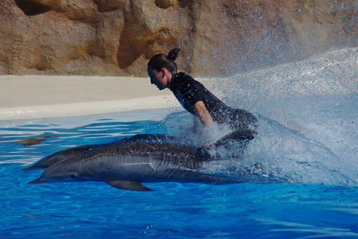 swimming with dolphins, swimming, water, dolphins, bucket list