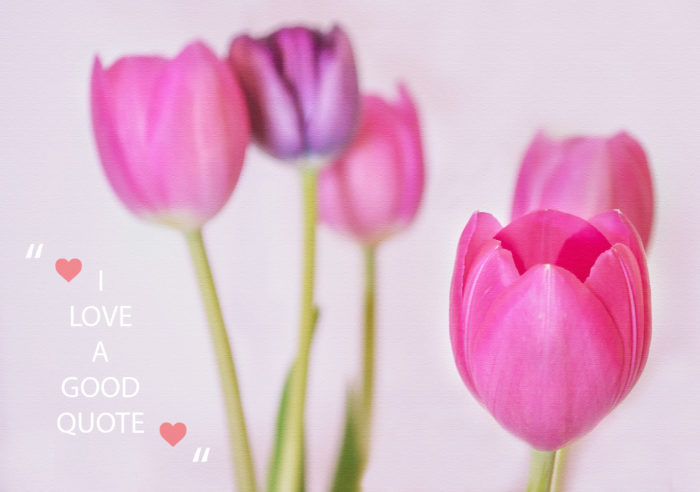 tulips, flowers, pink, purple, quote, quotes, I love quotes