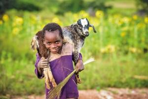 goat, christmas gift, world vision australia, world vision