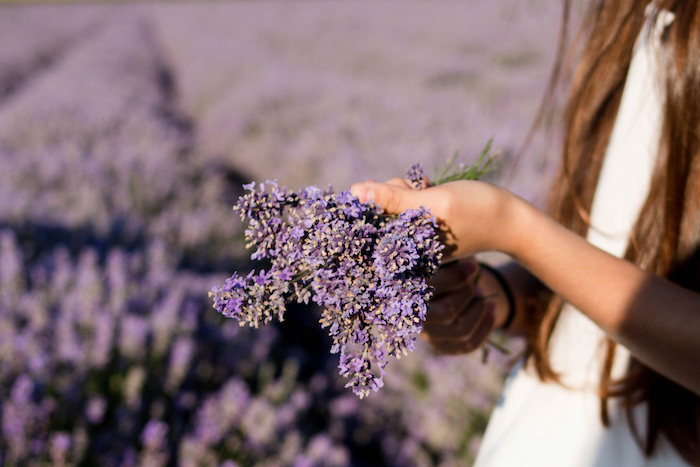 A girl's hands holding stalks of purple flowers, probably lavender.