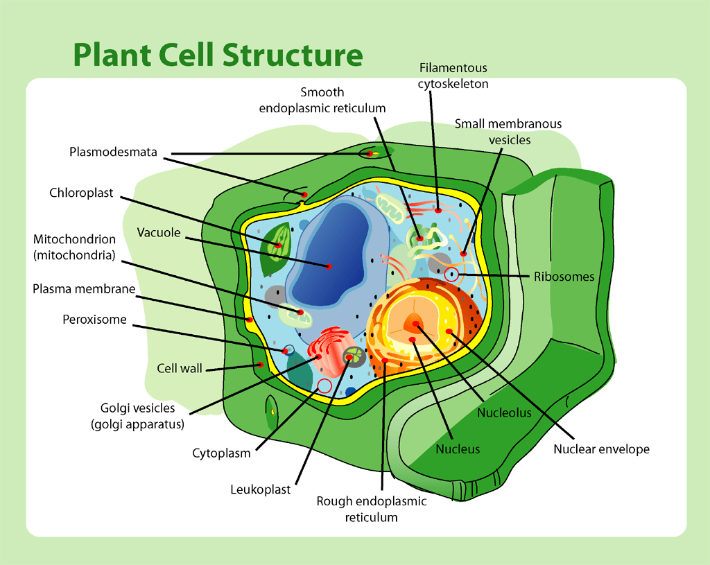 More Bio Notes From Next Lesson On Cells And Microscopes