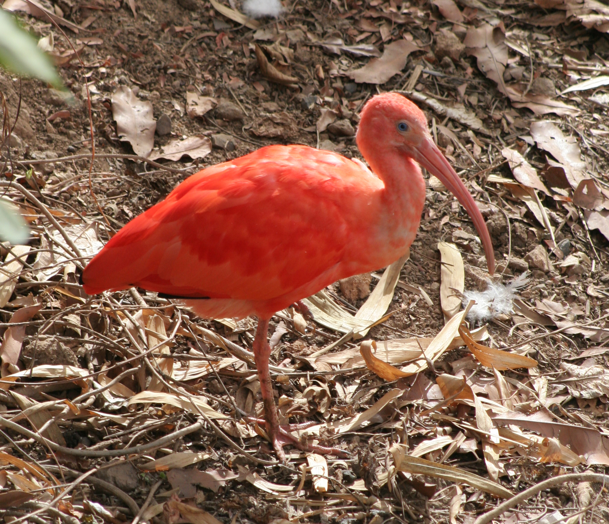 scarlet ibis short story plot diagram wire 2 lights to 1 switch the essay medieval r ce