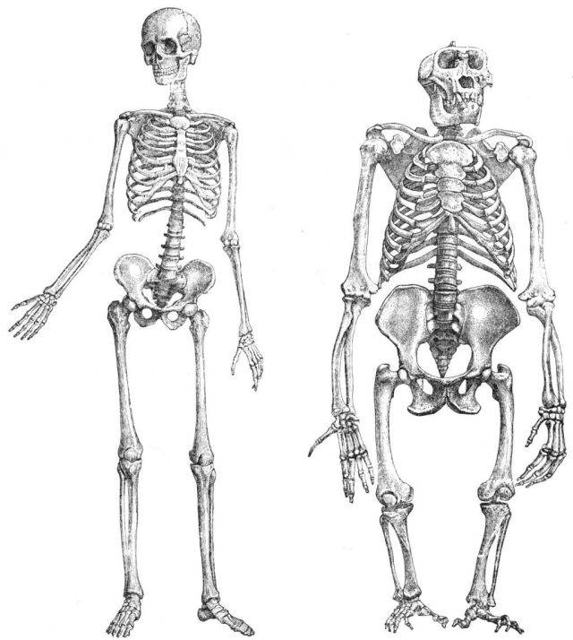 genetic difference between humans and chimps genetic difference between humans and apes dna difference between humans and chimps genetic similarity between humans and chimps dna difference between chimps and humans genome difference between human and chimpanzee genetic differences between humans and chimpanzees similarities between humans and chimpanzees genetic similarity between humans and chimpanzees differences between humans and chimpanzees similarities between chimps and humans differences between chimps and humans dna difference between humans and chimpanzees dna similarity between humans and chimps similarities between human and apes anatomical similarities between humans and chimpanzees difference between humans and chimpanzees similarity between human and chimpanzee dna