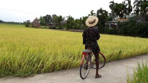 Meditation Retreat Vietnam - Write Your Journey: Cycling around the rice paddies was a welcomed changed from writing. Getting new inspiration in nature.